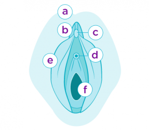 Äußere Anatomie weiblcihe Geschlechtsorgane
